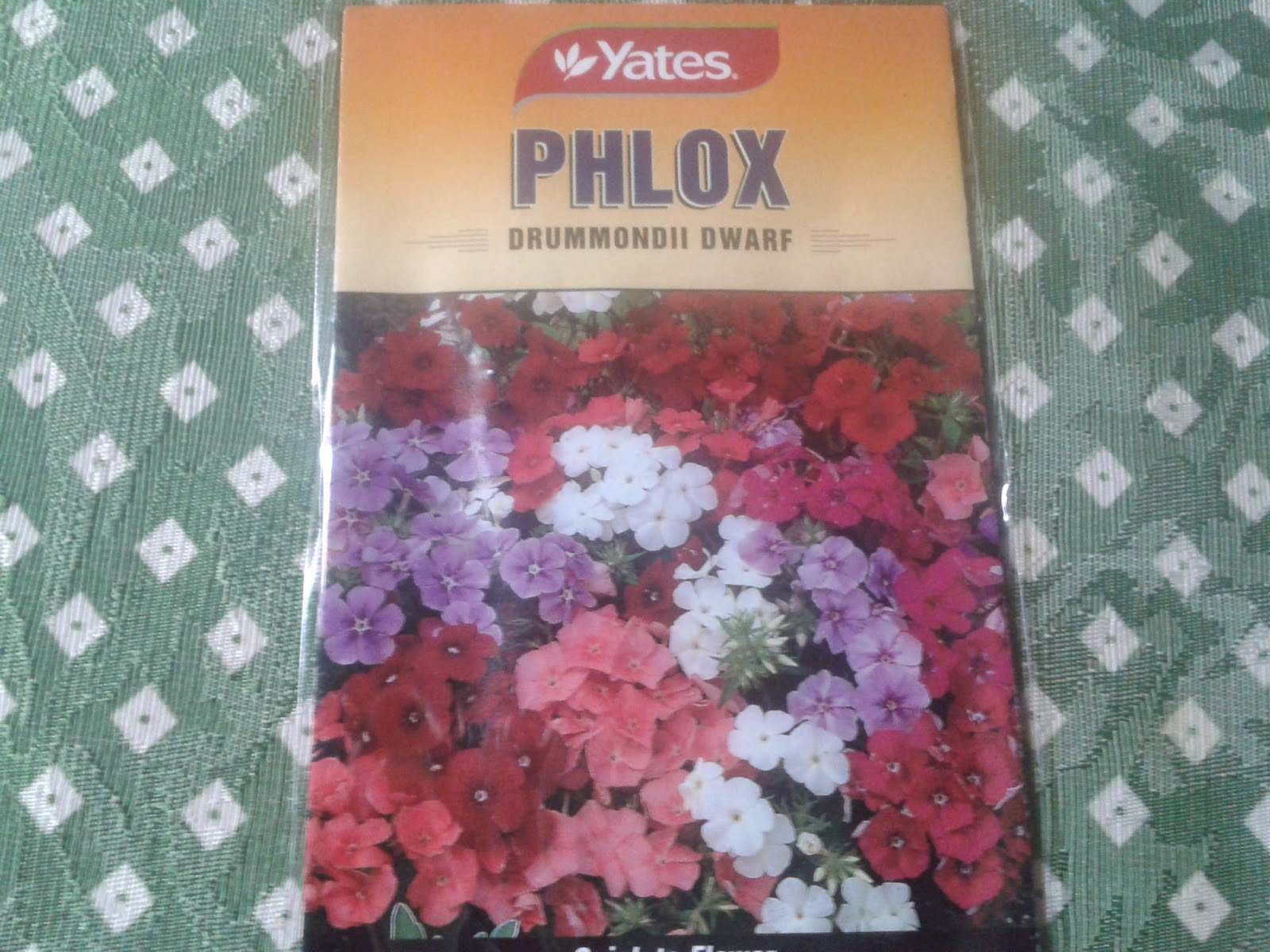 Phlox Seedlings
