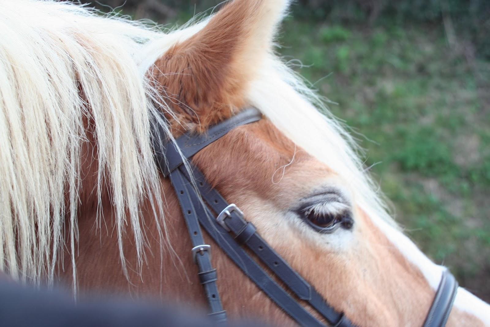 L'histoire qui ne dit pas son nom - cheval