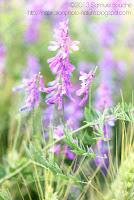 fleurs sauvages dans les champs