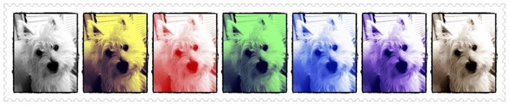 Our westie . TOto || American born Singaporean dog ...