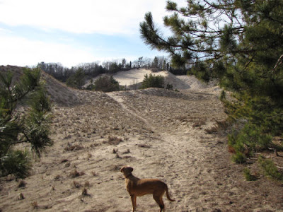 dog viewing sand dunes