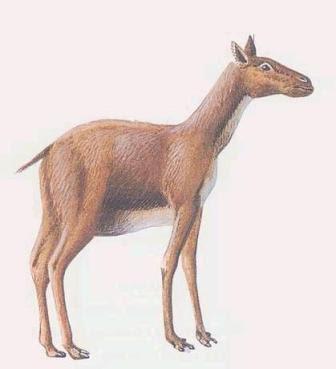 artyodactyla extinta Protylopus