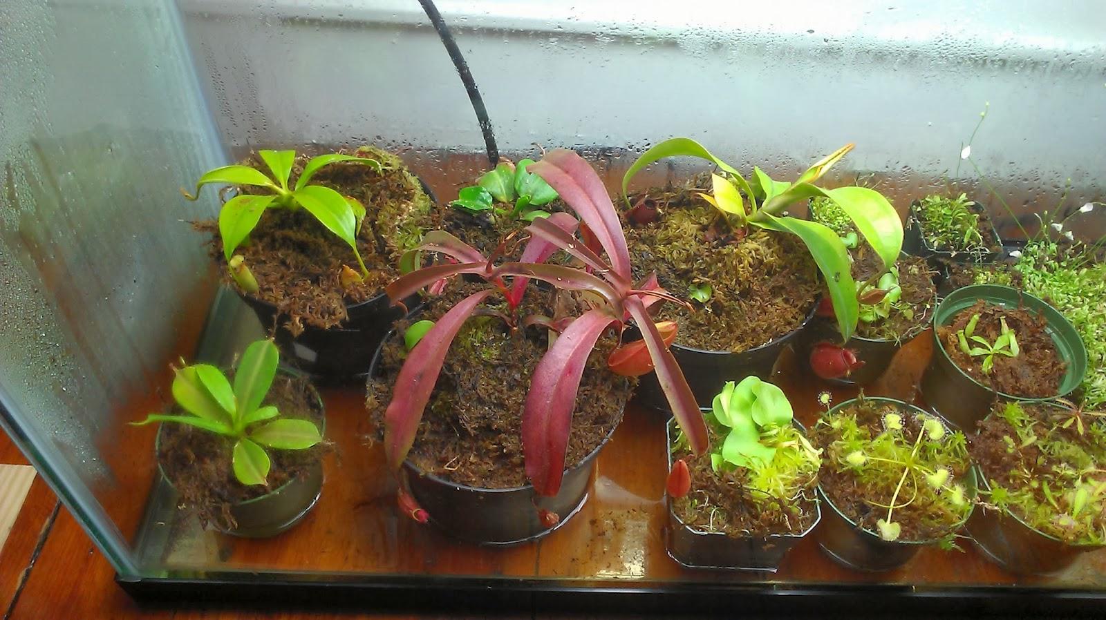 My 29 Gallon Terrarium Natch Greyes Carnivorous Plants