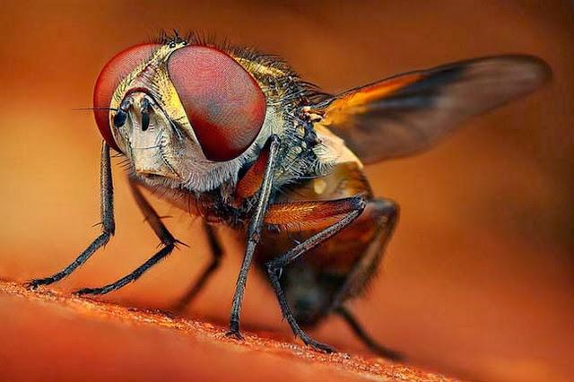 insectos-en-macro