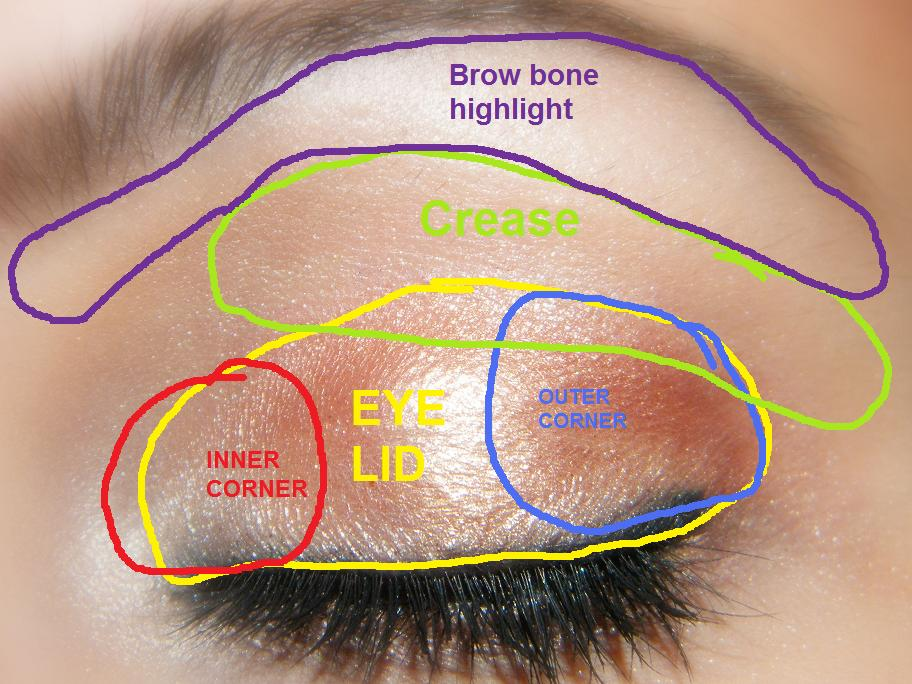 Beauty by cat how to apply eyeshadow how to apply eyeshadow ccuart Image collections