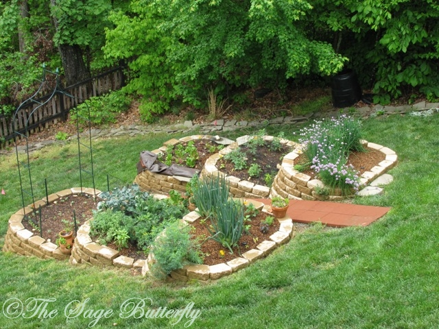The sage butterfly how we built our tiered raised bed - Gardening on slopes pictures ...