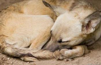 Ξέρετε γιατί τα σκυλιά κάνουν κύκλους προτού ξαπλώσουν; Αυτή είναι η απάντηση...