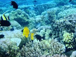 Menyelami keindahan Taman Laut Nasional Bunaken di Manado Yang Indah
