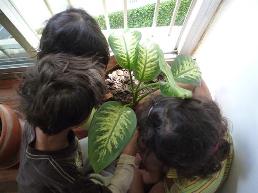 Labrando un hogar amigos del jard n en el apartamento for Amiguitos del jardin