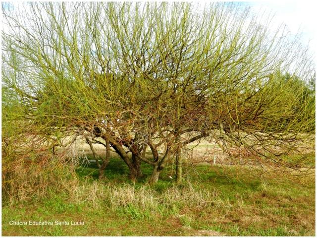 Los árboles caducos se preparan para la primavera - Chacra Educativa Santa Lucía