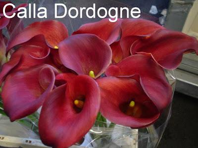 Calla Dordogne