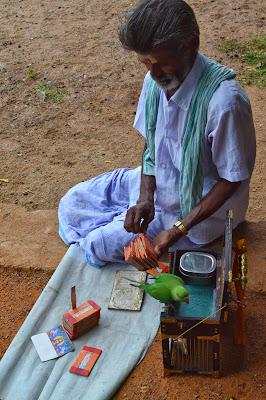 Parrot Astrology or Kili Josiyam in mahabalipuram