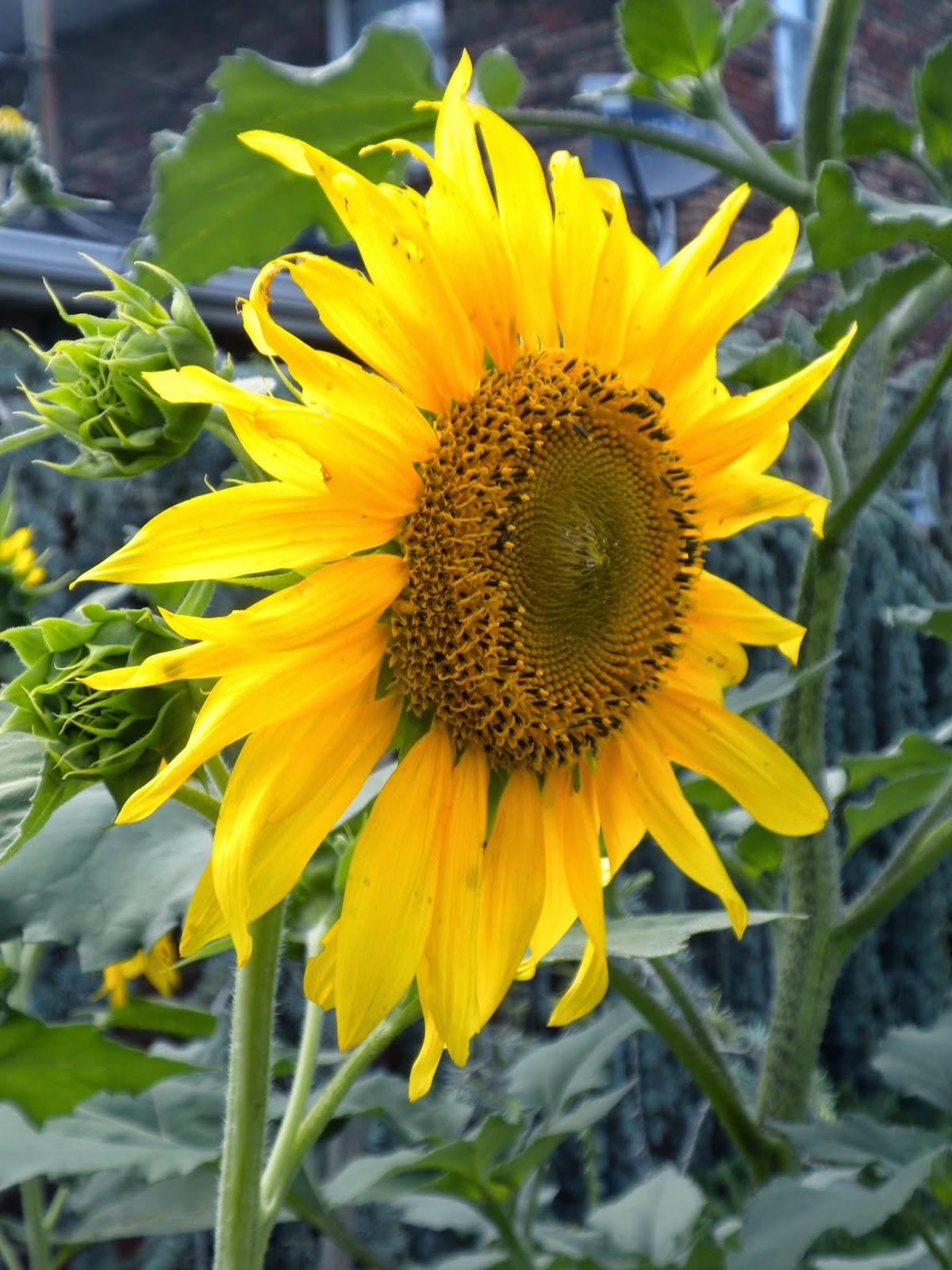 panoply surprise garden flowers 2014 progress