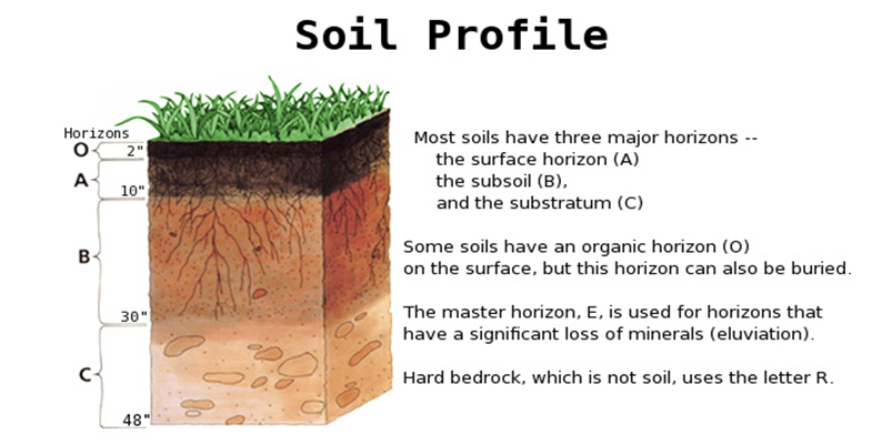humus soil definition for kids images