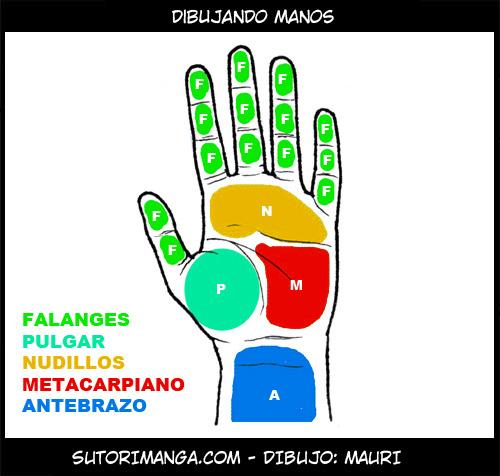 Sutori: Dibujando manos
