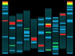 Illustration of DNA matches.