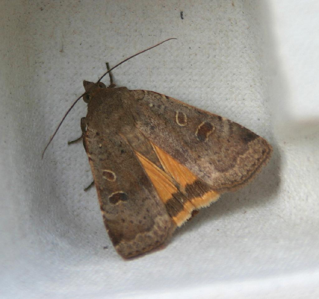 Norfolk wildlife trust bat and moth evening with norfolk for Bat box obi