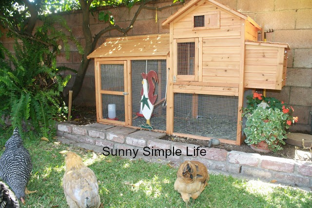 new chicks, new chickens, raising chickens, backyard chickens, small chicken coop