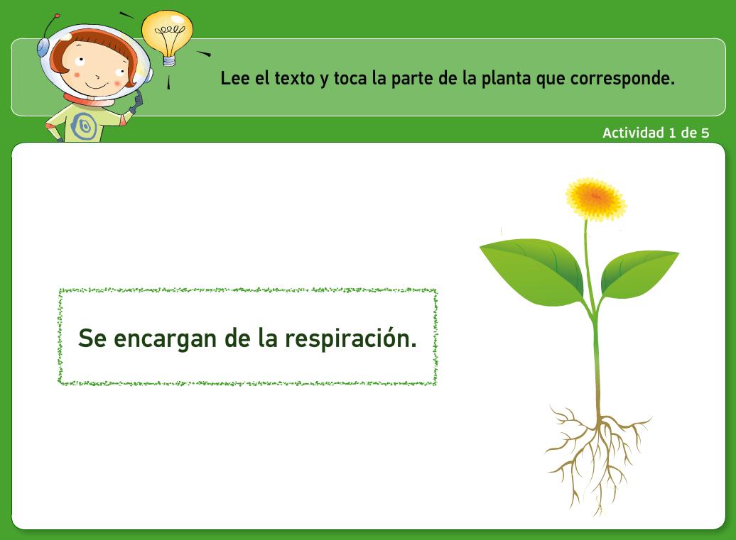 http://www.primerodecarlos.com/TERCERO_PRIMARIA/archivos/actividades_natura_tercero/7/1.swf