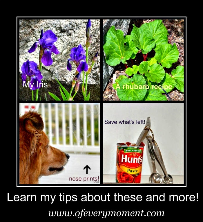 tips, window cleaning, iris, rhubarb, tomato paste,