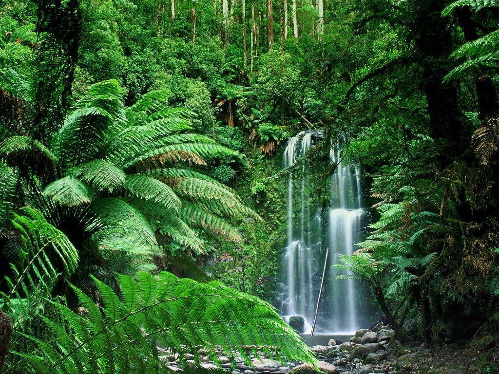Ως τροπικό δάσος ή ζούγκλα