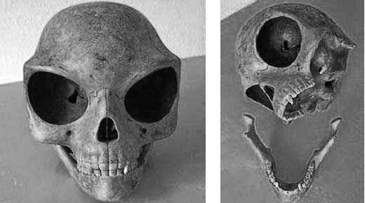 The Sealand Skull – Remains Of An Extraterrestrial Being?