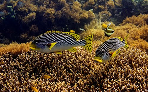 Por el fondo del mar entre peces, corales y arrecifes