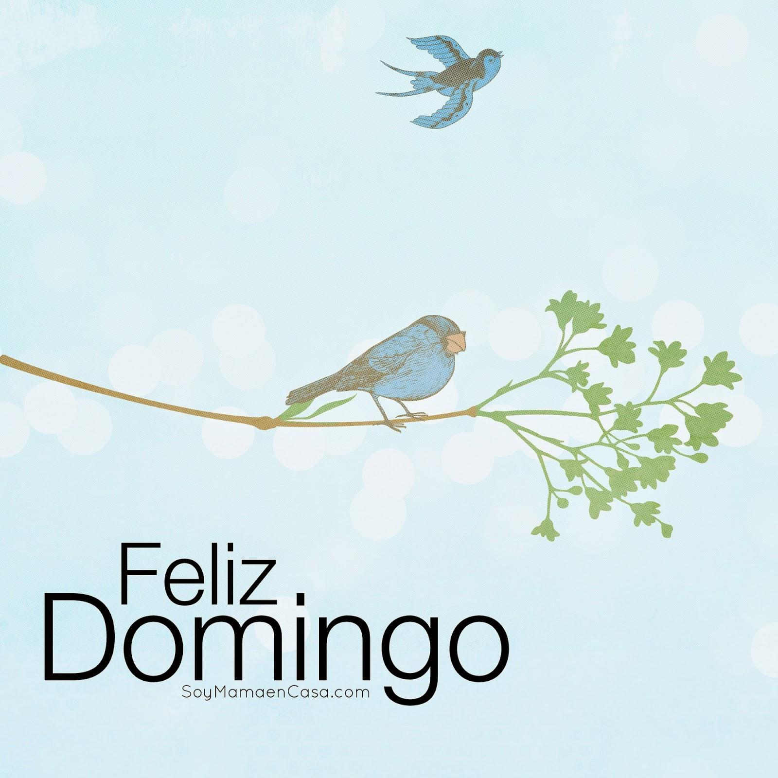 domingo, pájaros