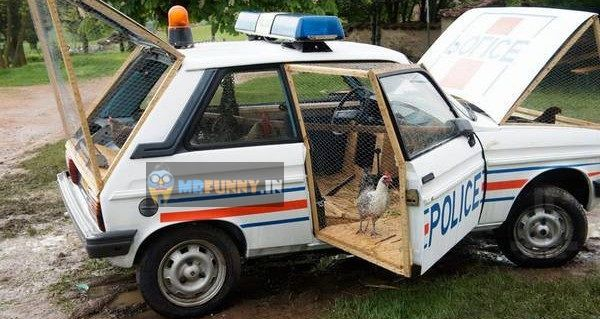 Police Car as Hen House Funny