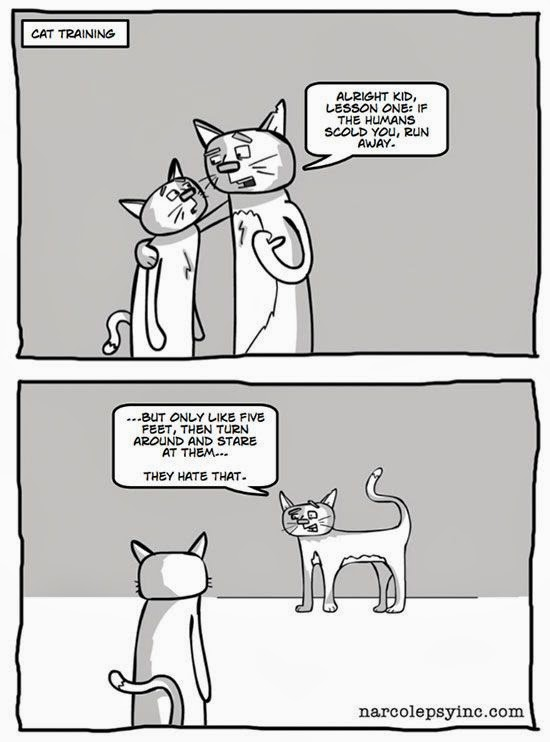 funny struggles of cat people