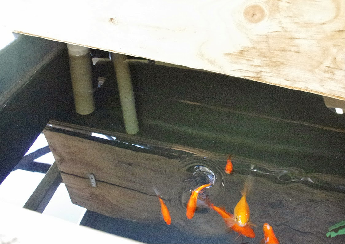 aquaponie B.ponics exterieur bac poisson aquaponie france diy aquaponics