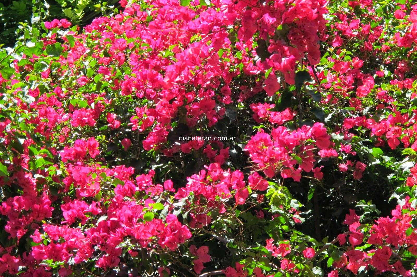 Imagenes De Plantas De Rosas - Fotos de flores rosas Fotos de flor rosa Infojardín