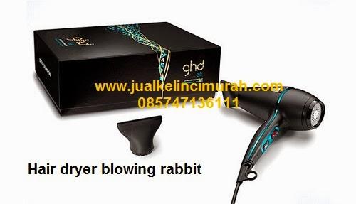 Hair Dryer Blowing Rabbit