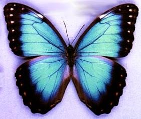 Imagenes de Mariposas, parte 2