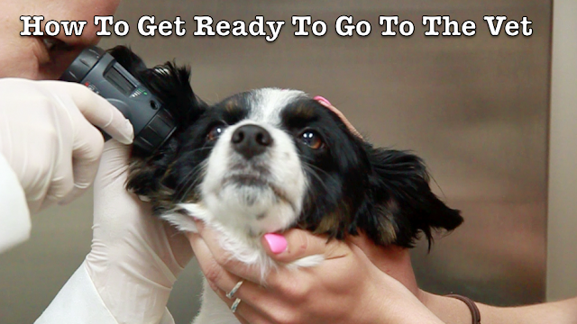 How to prepare to go to your dog's veterinary appointment