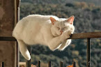 Meow :-)