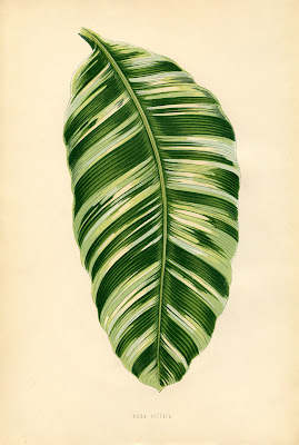 Vintage Printable Botanical Leaf