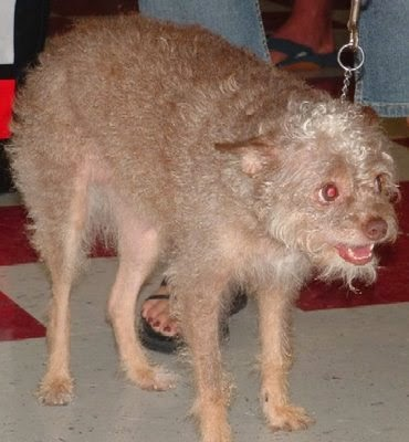 ugly old dog