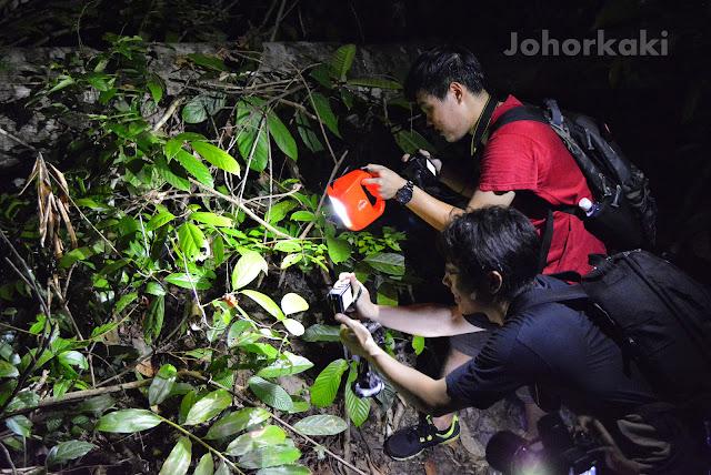 International-Bornean-Frog-Race-2014