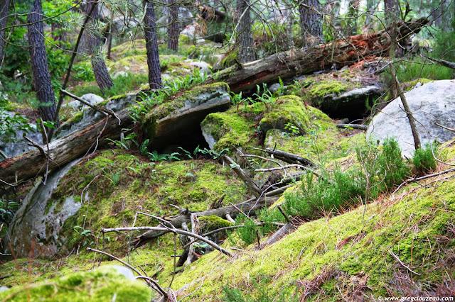 Vieux tronc dans la mousse Potala, Trois Pignons, (C) 2014 Greg Clouzeau
