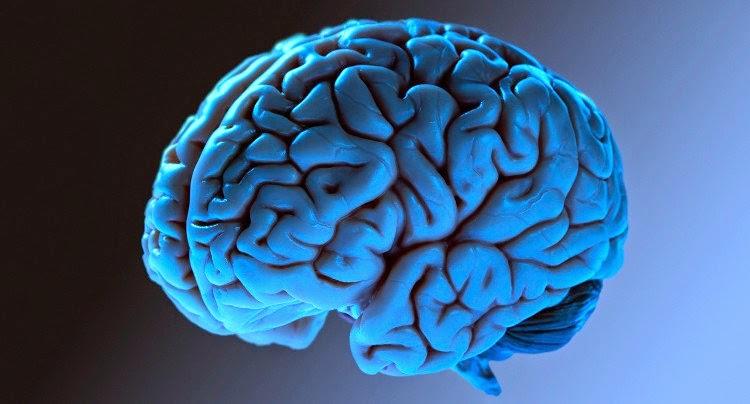 veja incríveis fatos sobre seu cérebro