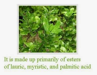herbal remedies for immune system 8
