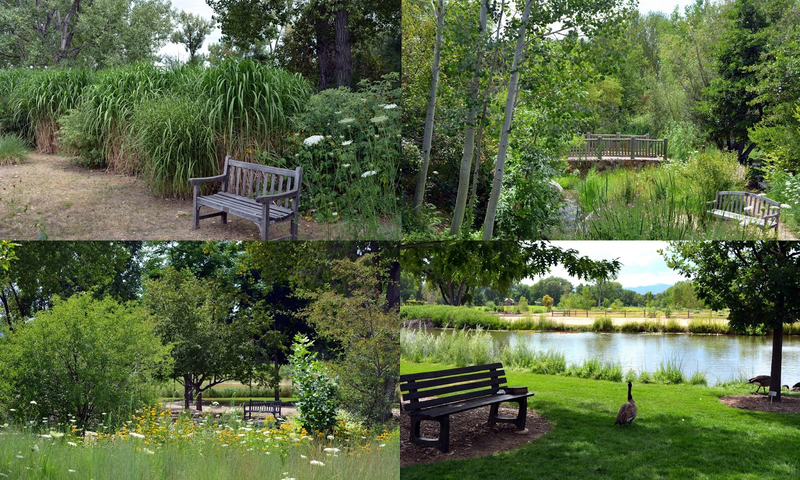 Mille Fiori Favoriti Hudson Gardens And Event Center In Littleton Co