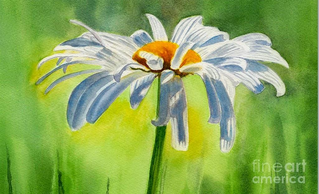 flor-blanca-pintada-con-acuarela