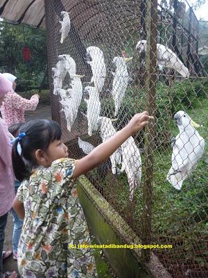 Kebun binatang bandung sebagai tempat wisata di bandung kota