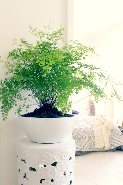 house plant home interior design accents - catherine masi