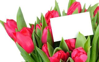 Tulipanes para mandar un mensaje