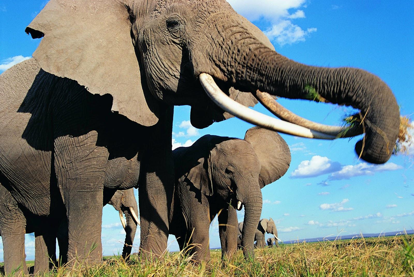 Slonovi - Page 2 Elephant_nature_pictures_8