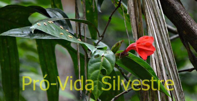 Pró-Vida Silvestre