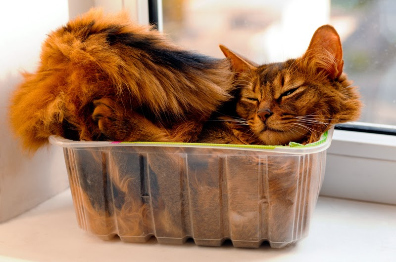 A resting cat squashed into a small box